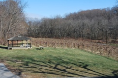 The Gazebo and Vineyard as Seen from the Deck